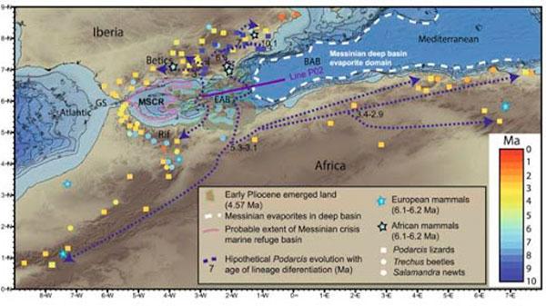 Propuesta del CSIC para incluir el Mar de Alborán como Zona de Protección Prioritaria.