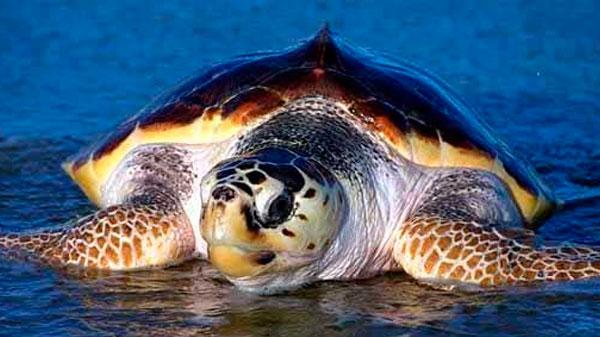 Tortugas en Cabo de Gata